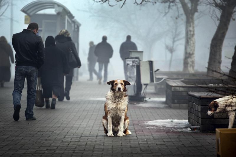 Dog's Life 16